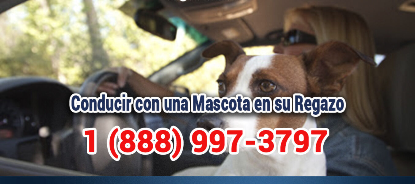 ¿Es Legal Conducir con una Mascota en su Regazo en Los Angeles?